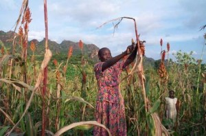 Farming in Nuba