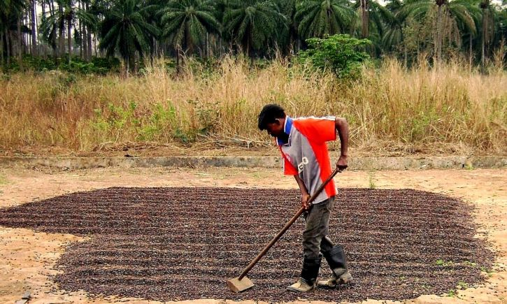 Seeds of Corporate Power vs Farmers' Rights